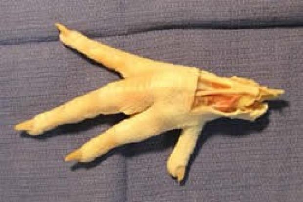 chicken foot